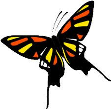 Butterflies and their Symbolic Meaning