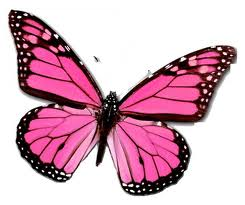 Butterfly Symbolism, The Symbolic Meaning of the Butterfly